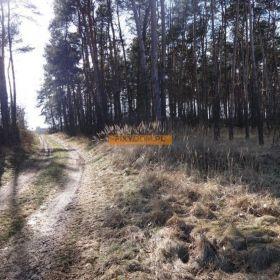 Działka leśna Graboszewo